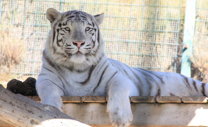 1.Sendaviva-Tigre_MG_5895