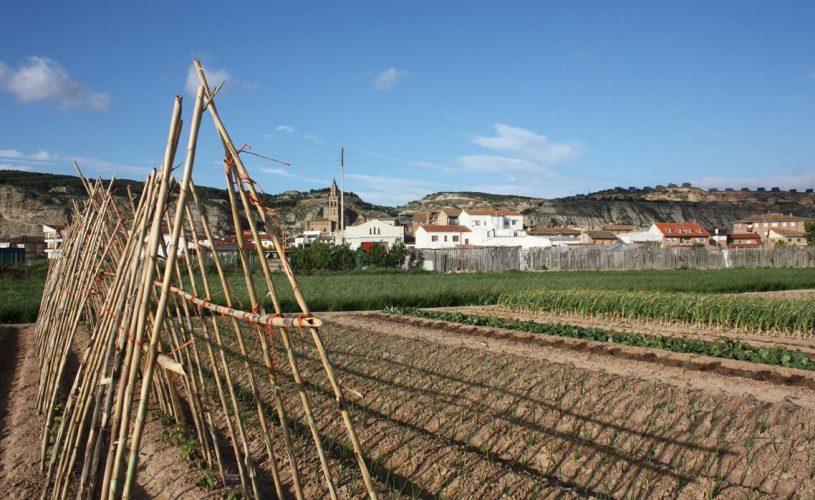 5.Hernani-Campo-Arguedas